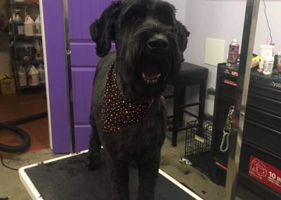 Dog Grooming Services For Big Dogs in Burleson Texas